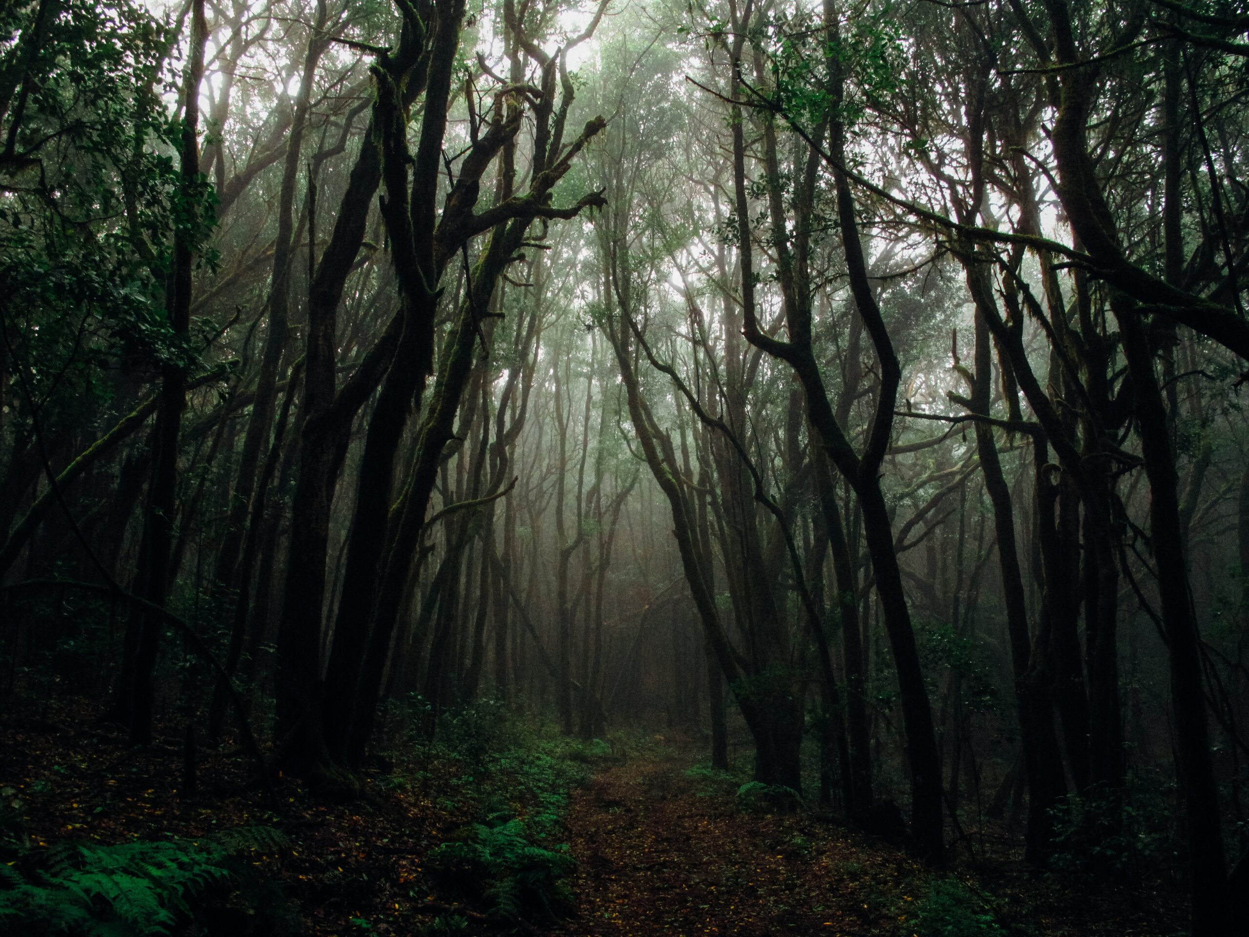 Read more about the article One Scary Trekking Experience | T.K. Storyteller
